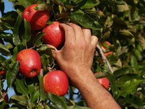 agricultura-exportacion