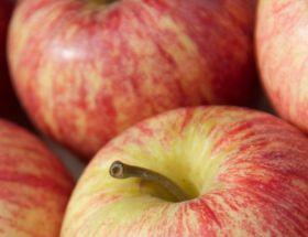 manzanasbicolores