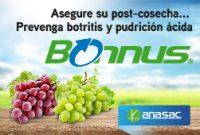 Anasac Bonus
